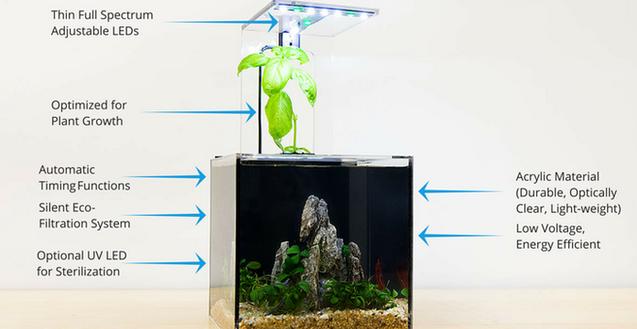 懒人养鱼必备 永远不需要换水的生态鱼缸-广州磐众智能科技有限公司